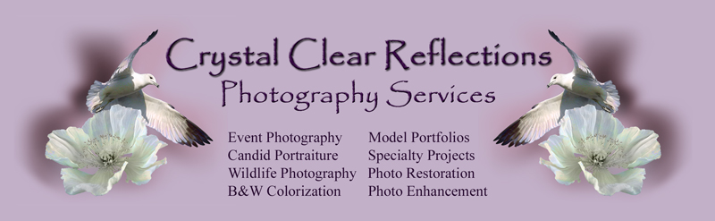 Crystal Clear Reflections Photography Service Logo